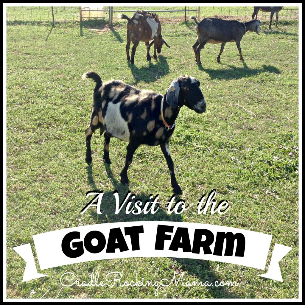 A Visit to the Goat Farm CradleRockingMama.com