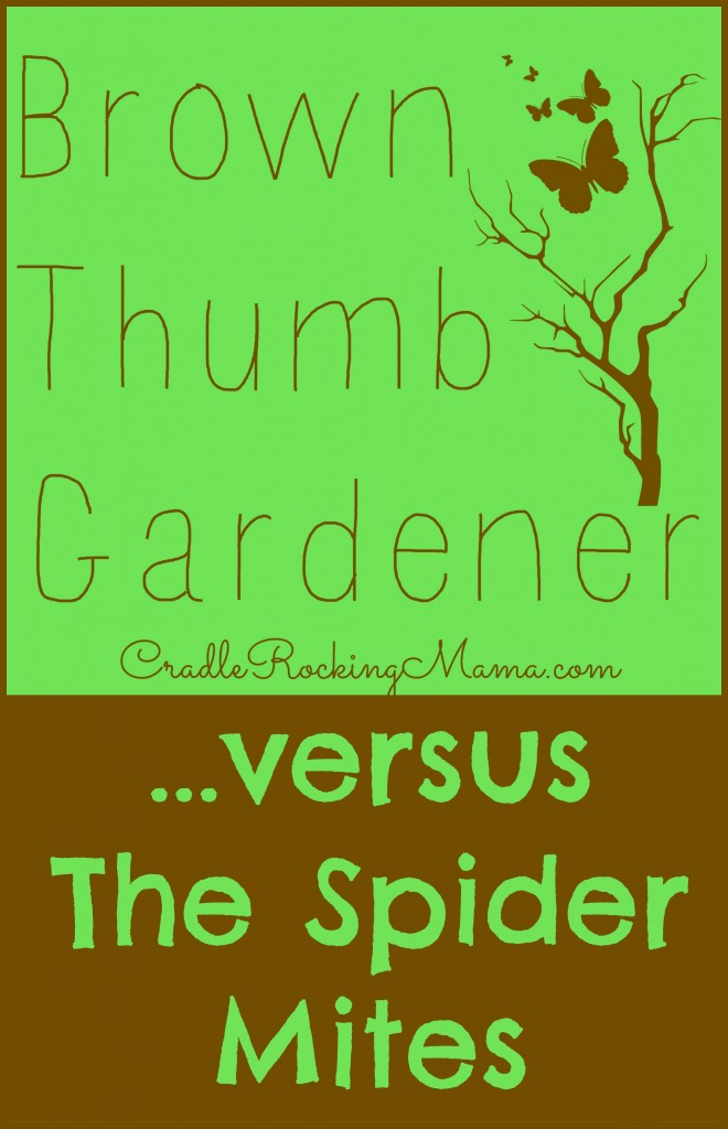 Brown Thumb Gardener versus the Spider Mites CradleRockingMama.com