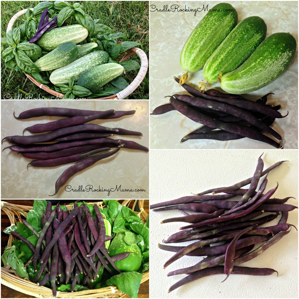 Garden Harvest Collage CradleRockingMama.com