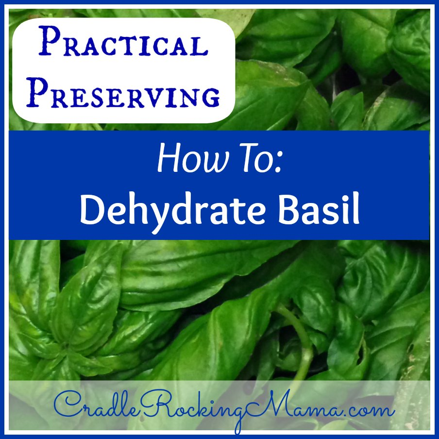 Practical Preserving How to Dehydrate Basil CradleRockingMama.com