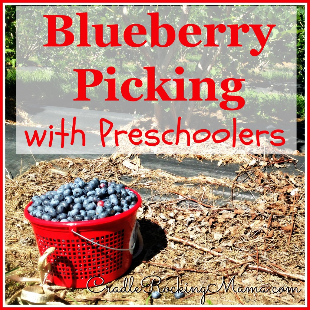 Blueberry Picking with Preschoolers CradleRockingMama.com